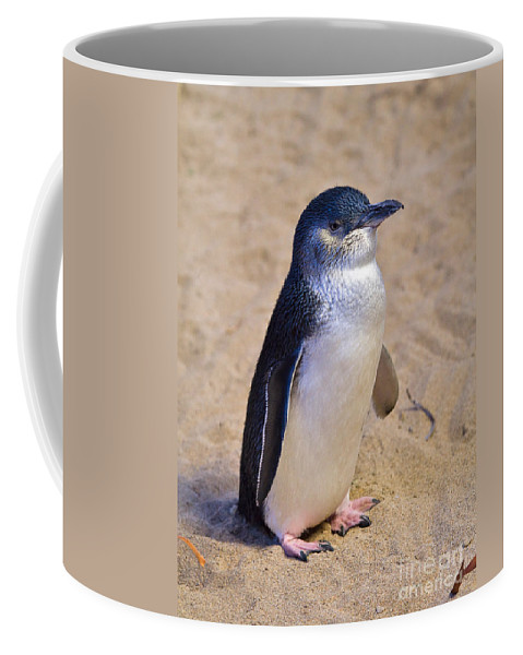 Nature Coffee Mug featuring the photograph Little Penguin by Louise Heusinkveld