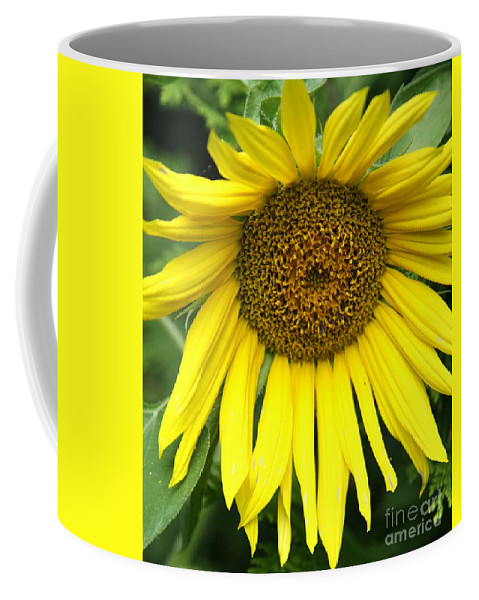 Sunflower Coffee Mug featuring the photograph Little Sunshine by Christiane Schulze Art And Photography