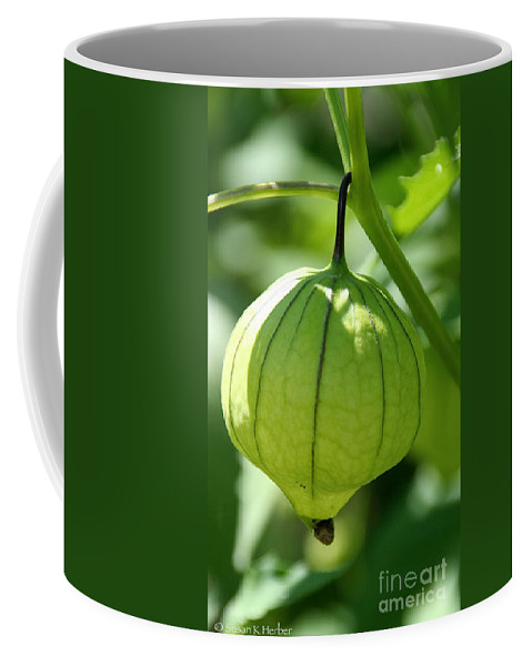 Flower Coffee Mug featuring the photograph Living Lantern by Susan Herber