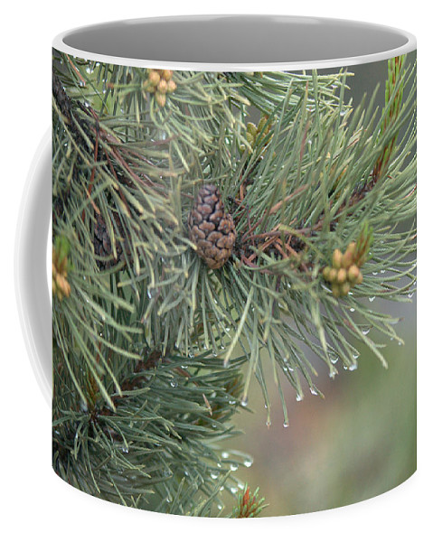 Pine Coffee Mug featuring the photograph Lodge Pole Pine In The Fog by Frank Madia