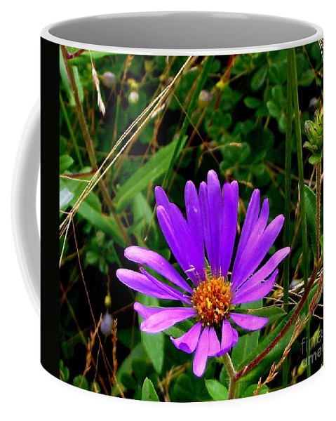 Aster Coffee Mug featuring the photograph Lone Aster by CapeScapes Fine Art Photography