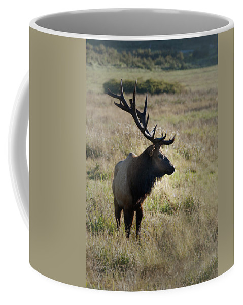 Elk Coffee Mug featuring the photograph Lone Elk by Betty Depee