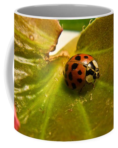 Beetle Coffee Mug featuring the photograph Lone Lady Bird Beetle by Douglas Barnett
