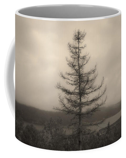 Bras D'or Coffee Mug featuring the photograph Lone Pine And The Bras D'or by David Stone