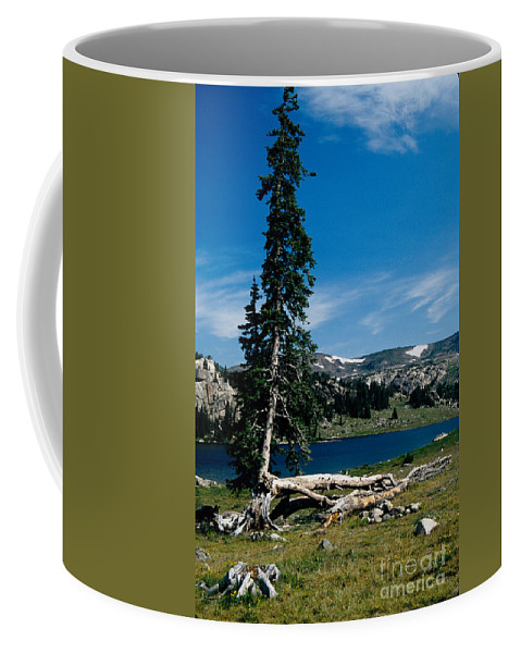 Mountains Coffee Mug featuring the photograph Lone Tree at Pass by Kathy McClure