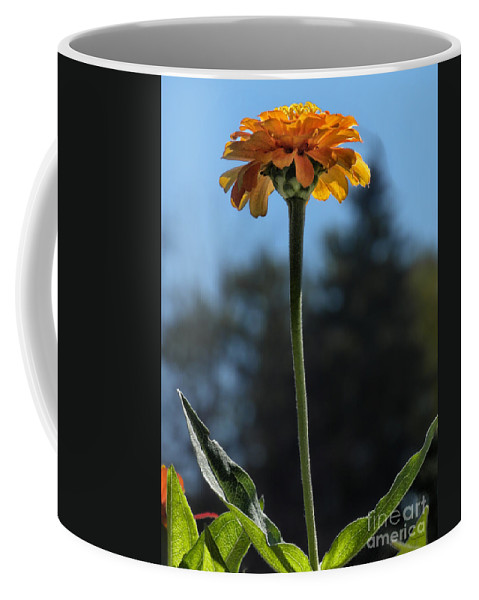 Floral Coffee Mug featuring the photograph Lone Zinnia 03 by Thomas Woolworth