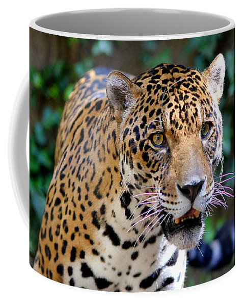 Bird Coffee Mug featuring the photograph Look At Me by Evan Peller