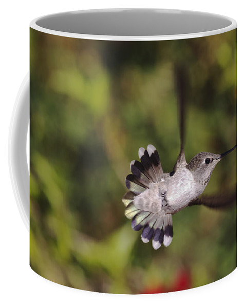 anna's Hummingbird Coffee Mug featuring the photograph Look At Meeeeee by Mike Herdering