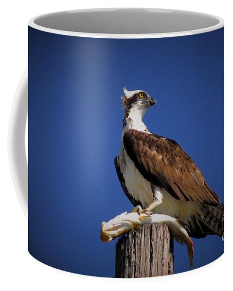 Osprey Coffee Mug featuring the photograph Look Both Ways by Quinn Sedam