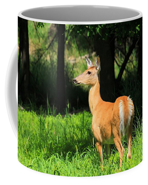 Deer Coffee Mug featuring the photograph Looking At The Fawnns by Bruce Nikle