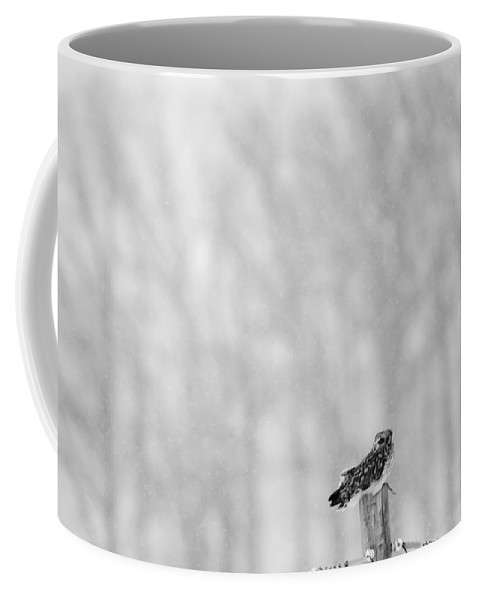 Short Eared Owl Coffee Mug featuring the photograph Looking Backwards by Tracy Winter