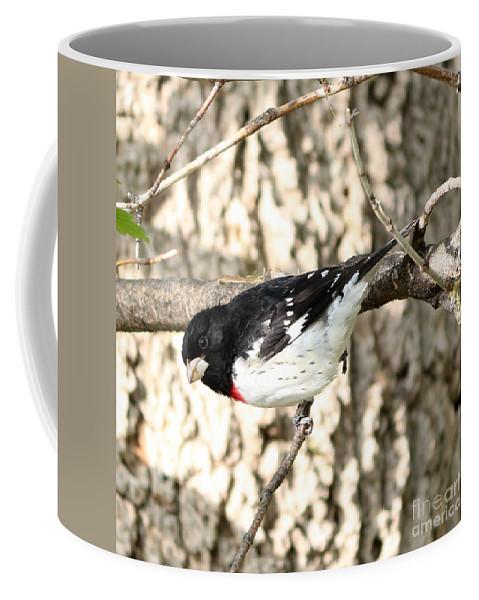 Rose Breasted Grosbeak Coffee Mug featuring the photograph Looking Down by Lori Tordsen