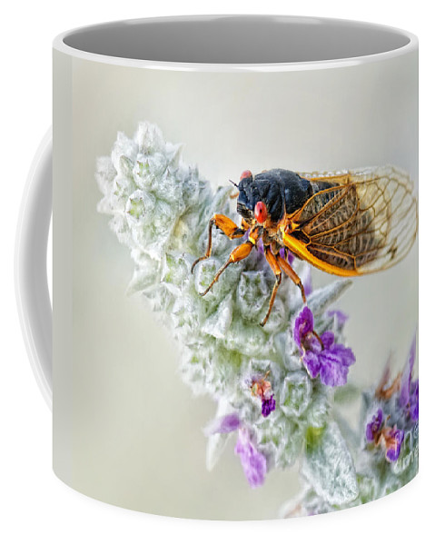 Cicada Coffee Mug featuring the photograph Looking Pretty by Claudia Kuhn
