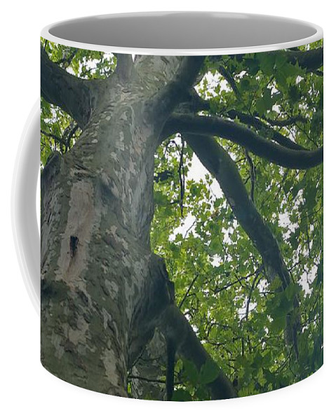 Tree Coffee Mug featuring the photograph Looking Up by Brady Lane