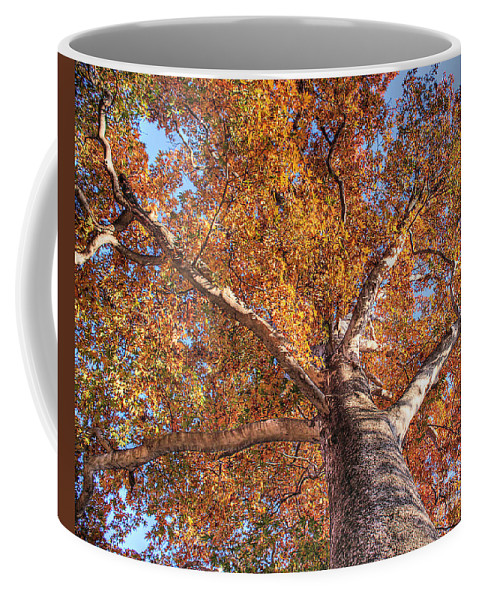Azerbaijan Coffee Mug featuring the photograph Looking Up by Emily Kay