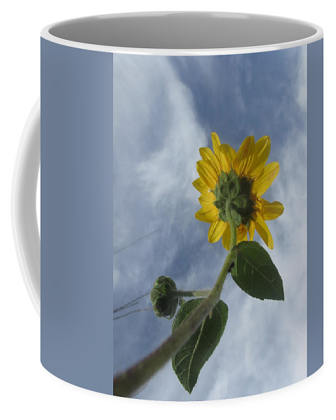 Flower Coffee Mug featuring the photograph Looking Up by Jewell McChesney