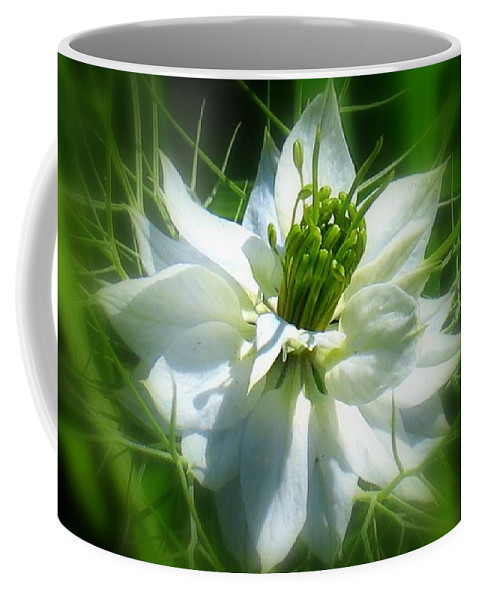 Love In A Mist Coffee Mug featuring the photograph Love In A Mist by Patti Whitten