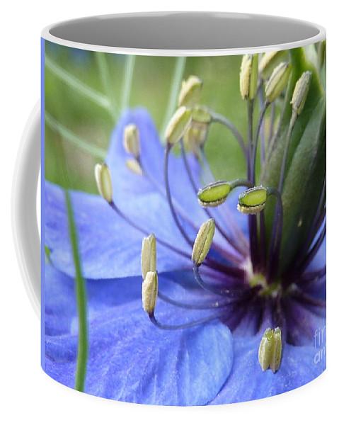 Nigella Coffee Mug featuring the photograph Love-in-a-mist by Rain Shine