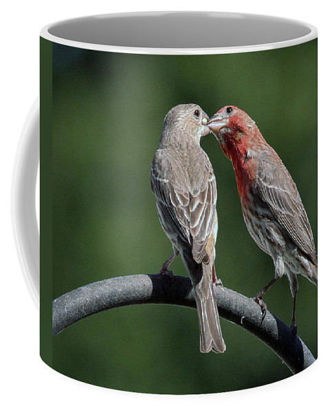 Finch Coffee Mug featuring the photograph Love by Jackson Pearson