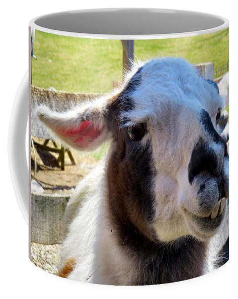Alpaca Coffee Mug featuring the photograph Love Struck by Art Dingo