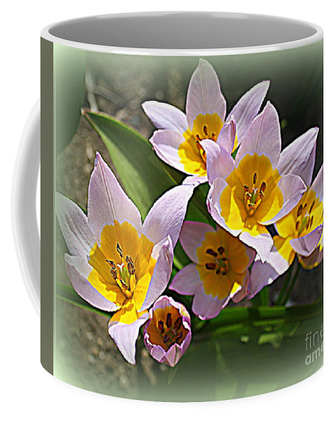 Lovely In White And Yellow Tulips Coffee Mug featuring the photograph Lovely In White And Yellow - Tulips by Dora Sofia Caputo Photographic Design and Fine Art