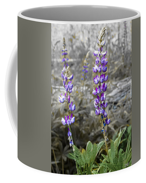 Lupine Coffee Mug featuring the photograph Lovely Lupines by Susan Eileen Evans