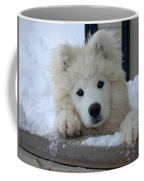 Samoyed Coffee Mug featuring the photograph Loving The Snow by Shane Bechler