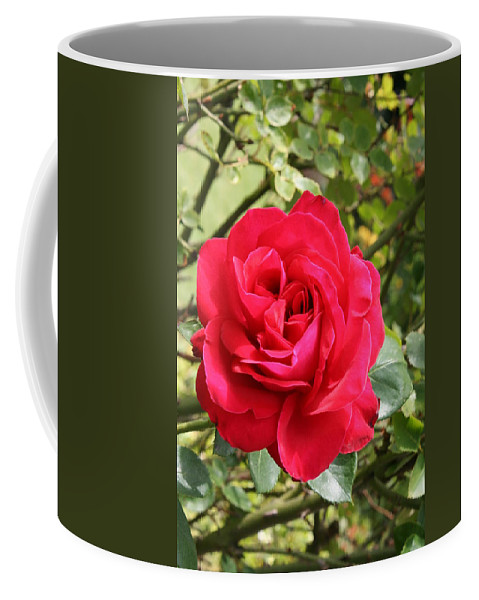 Rose Coffee Mug featuring the photograph Lovely Red Rose by Christiane Schulze Art And Photography