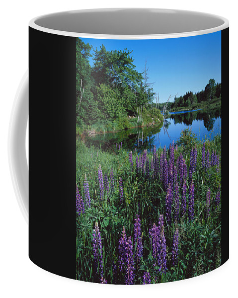 Maine Coffee Mug featuring the photograph Lupin And Lake-v by Tom Daniel