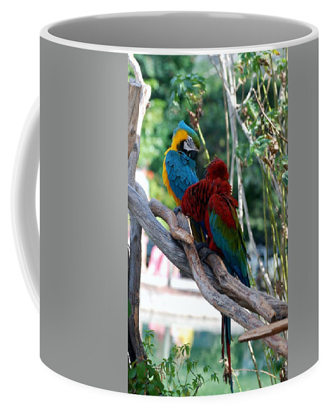 Macaws Coffee Mug featuring the photograph Macaws Of Color24 by Rob Hans