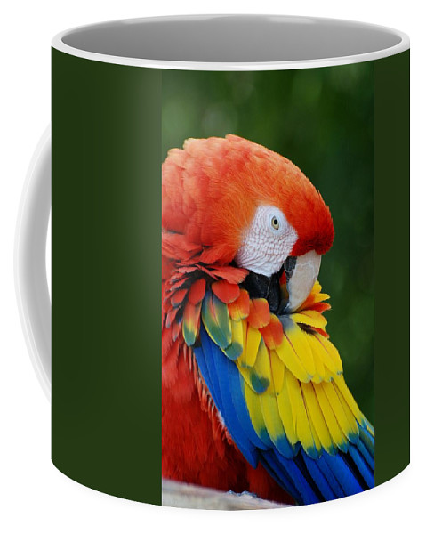 Macaws Coffee Mug featuring the photograph Macaws Of Color28 by Rob Hans