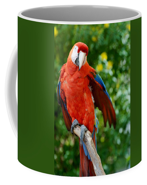Macaws Coffee Mug featuring the photograph Macaws Of Color30 by Rob Hans