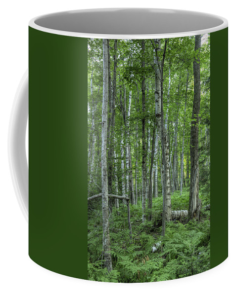 Birch Coffee Mug featuring the photograph Madeline Island Birch II by Mark Harrington
