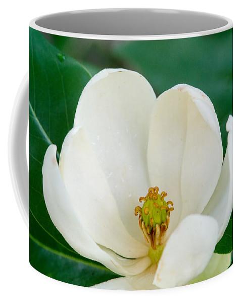 Magnolia Coffee Mug featuring the photograph Magnolia Blossom 2 by Douglas Barnett