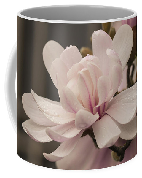 Spring Coffee Mug featuring the photograph Magnolia Dream by Karen Forsyth