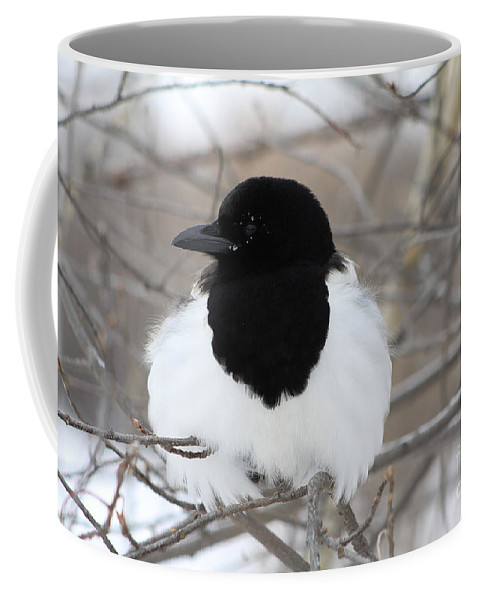 Bird Coffee Mug featuring the photograph Magpie Profile by Alyce Taylor