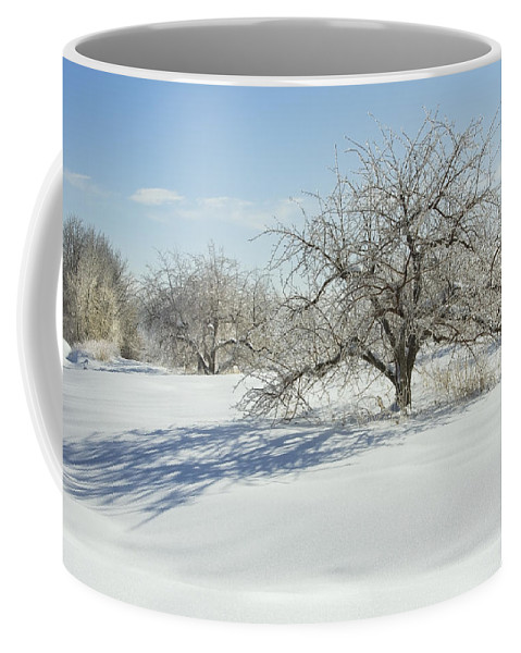 Apple Coffee Mug featuring the photograph Maine Apple Trees Covered In Ice And Snow by Keith Webber Jr