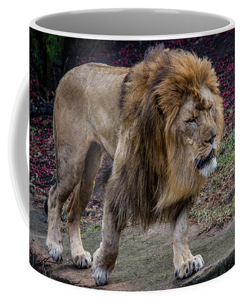 Lion Coffee Mug featuring the photograph Majestic Lion by Mike Burgquist