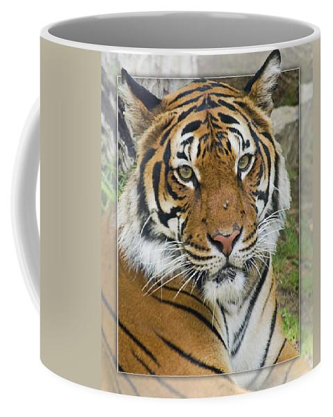 Malayan Tiger Coffee Mug featuring the photograph Malayan Tiger 1 by Walter Herrit