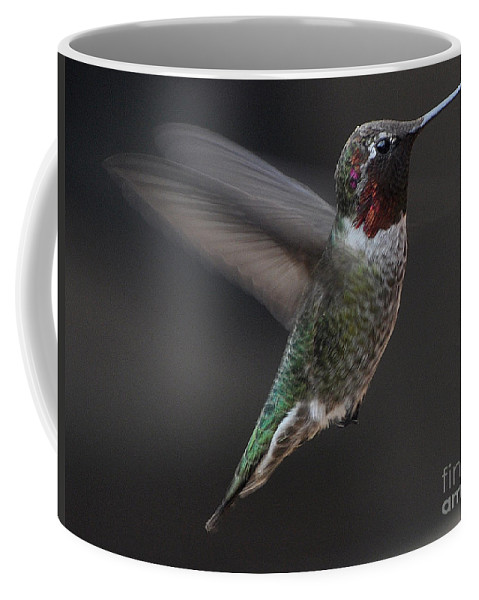 Hummingbird Coffee Mug featuring the photograph Male Anna Hummingbird In Flight by Jay Milo