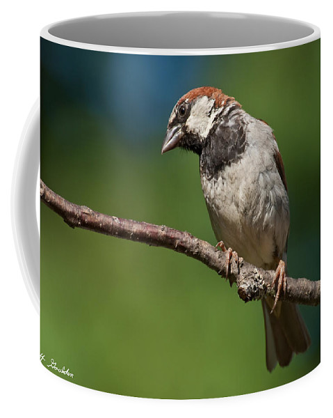Animal Coffee Mug featuring the photograph Male House Sparrow Perched In A Tree by Jeff Goulden