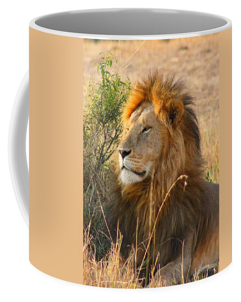 Lion Coffee Mug featuring the photograph Male Lion by Amanda Stadther