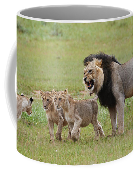 Cub Coffee Mug featuring the photograph Male Lion Teaches Cubs by Juergen Ritterbach
