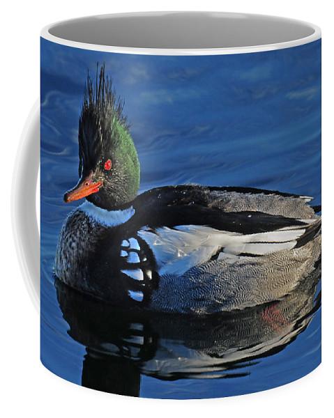 Merganser Coffee Mug featuring the photograph Male Merganser by Dave Mills