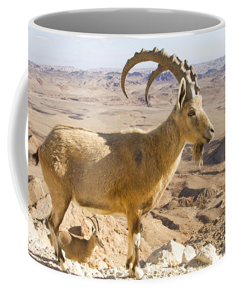 Animal Coffee Mug featuring the photograph Male Nubian Ibex Capra Ibex Nubiana by Eyal Bartov