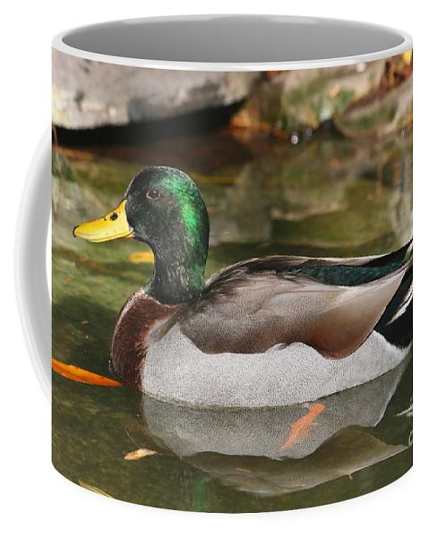 Duck Coffee Mug featuring the photograph Mallard Duck by Ken Keener