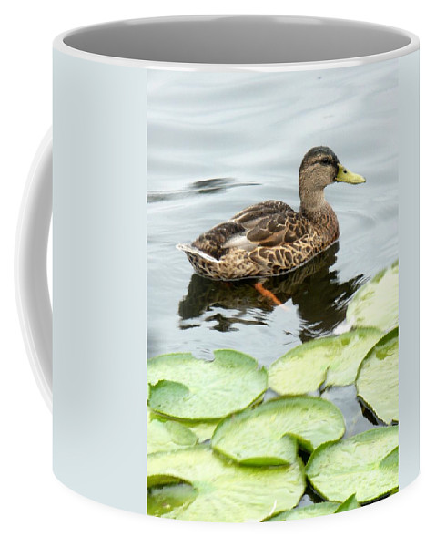 Mallard Coffee Mug featuring the photograph Mallard Lilly Pad by Nicki Bennett