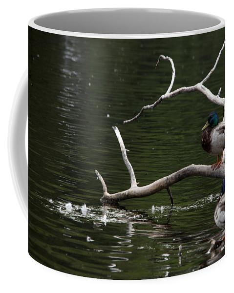 Mallard Coffee Mug featuring the photograph Mallard Standing Post by Jayne Gohr