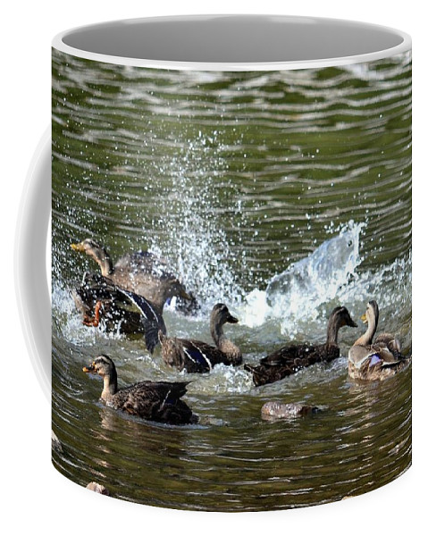 Mallard Coffee Mug featuring the photograph Mallard Water Party 2 by Maria Urso