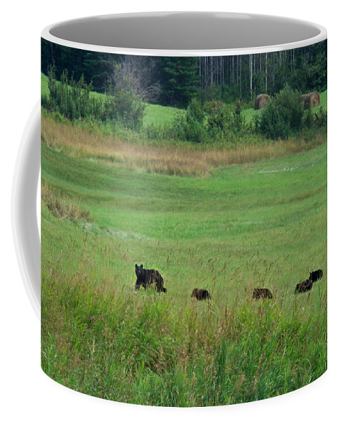 Animals Coffee Mug featuring the photograph Mama Bear And 4 Cubs by Mary Lee Dereske